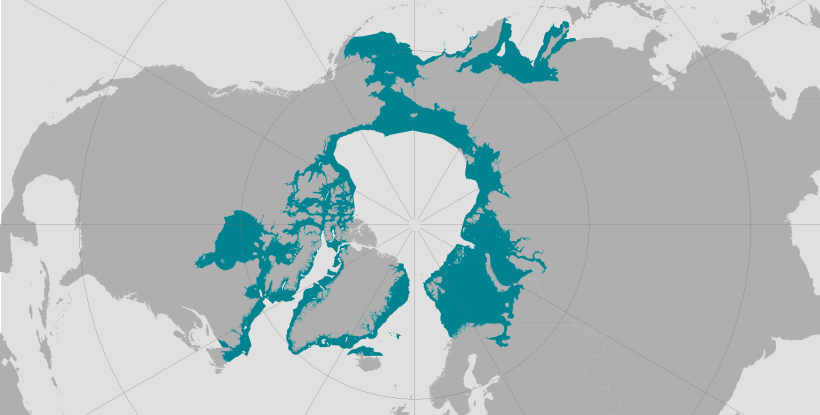 World map providing approximate representation of the bearded seal's range.