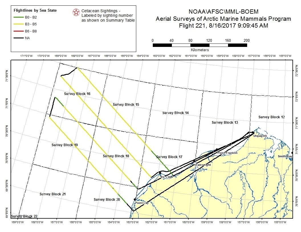 ASAMM Marine Mammals Aerial Survey