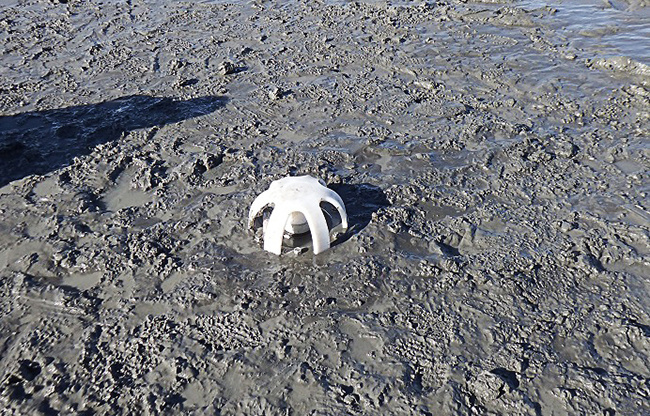 Cook Inlet beluga whale research