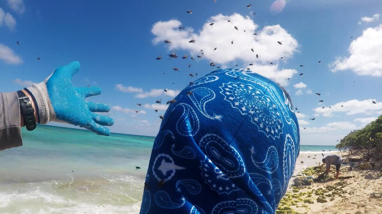 Flies swarmoverhead at Lisianski Island