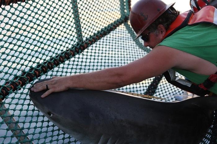 shark_cruise_44b.jpg
