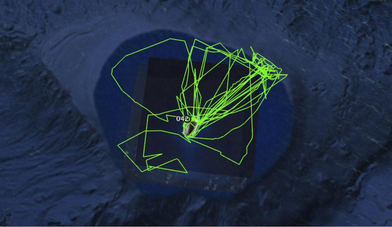 Green satellite tracks around Laysan.