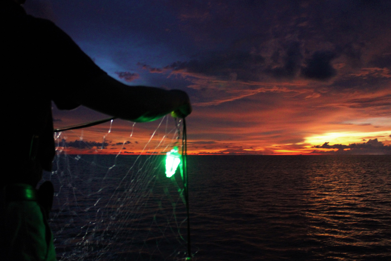 Fishermen set out nets with green LED lights attached