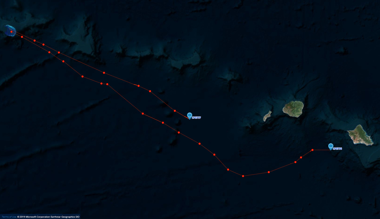 E36 (lower blue marker) and E95's migrations from French Frigate Shoals.