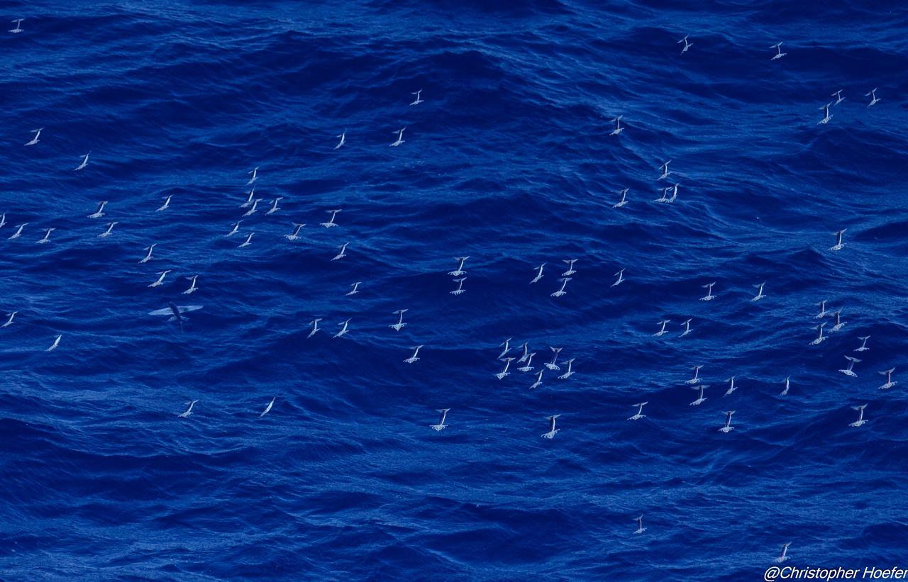 09_flying squid.jpg