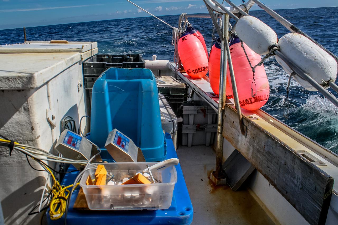 Longloine survey gear on the deck of a boat