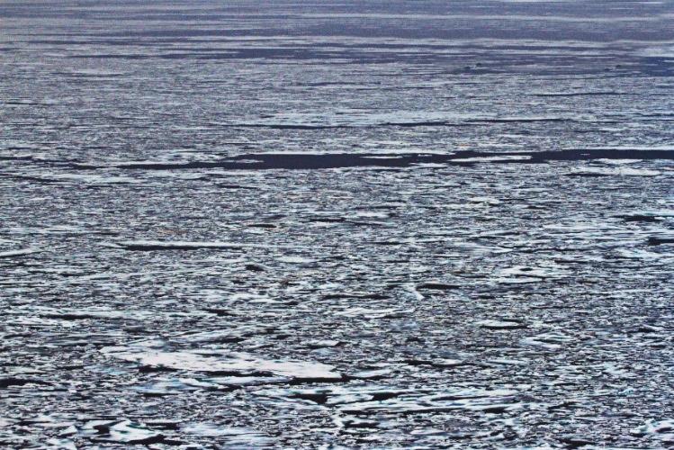 Aerial_Surveys_of_Arctic_Marine_Mammals-2018 (4).jpg