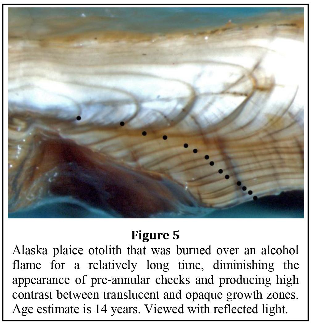 Alaska Plaice Age & Growth Data
