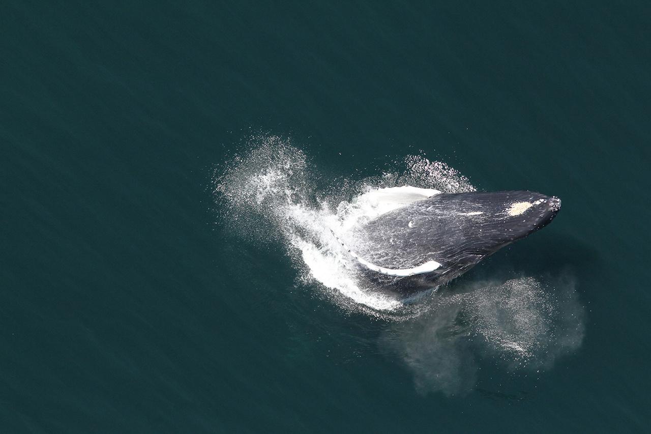 2020-whale-week-humpback-1280x853-main.jpg