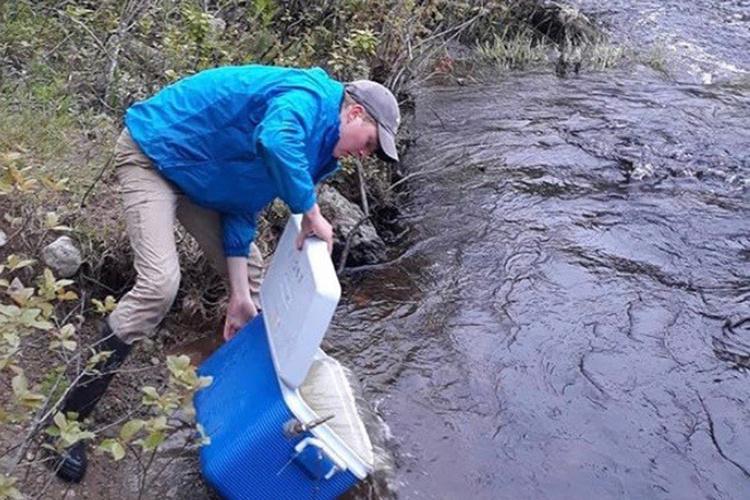 Owen VanDerAa releases salmon smolts into river