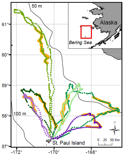 Foraging paths for six satellite-tracked northern fur seals in 2016 (purple) and 2017 (green). Saildrone follow paths are overlaid in orange.