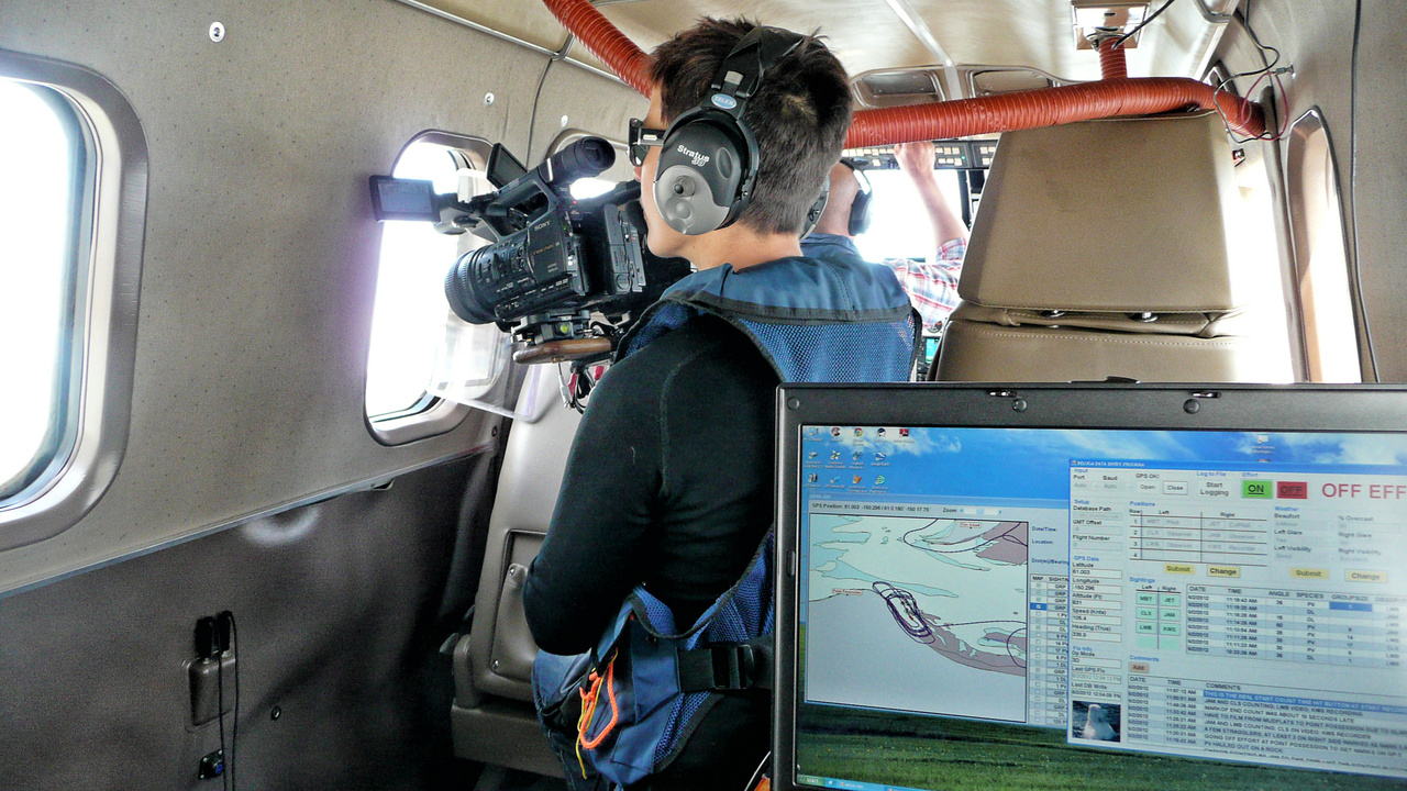 LindaVate Brattström captures video footage during a Cook Inlet beluga whale aerial survey.Photo: NOAA Fisheries.
