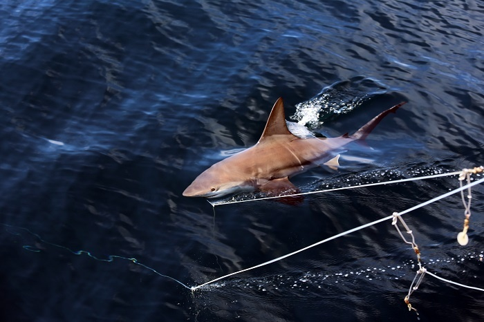 shark_cruise_21.jpg