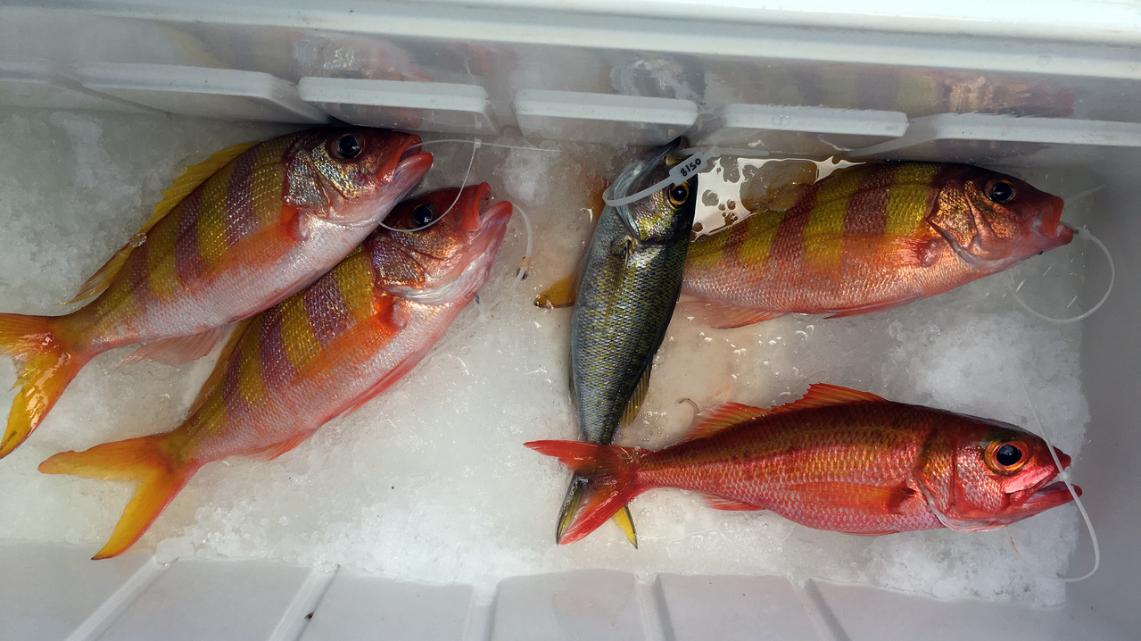 Snappers such as ehu (Etelis carbunculus), gindai (Pristipomoides zonatus), and yellowtail snapper (P. auricilla)
