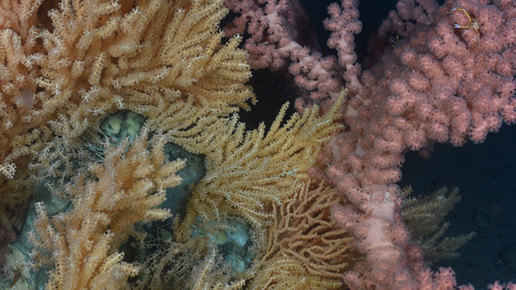 colorful-corals-4.jpg