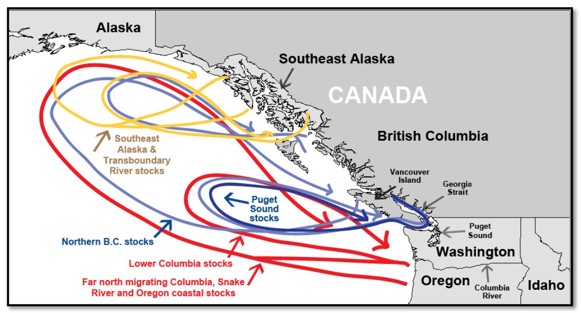 Map of Chinook salmon migration patterns