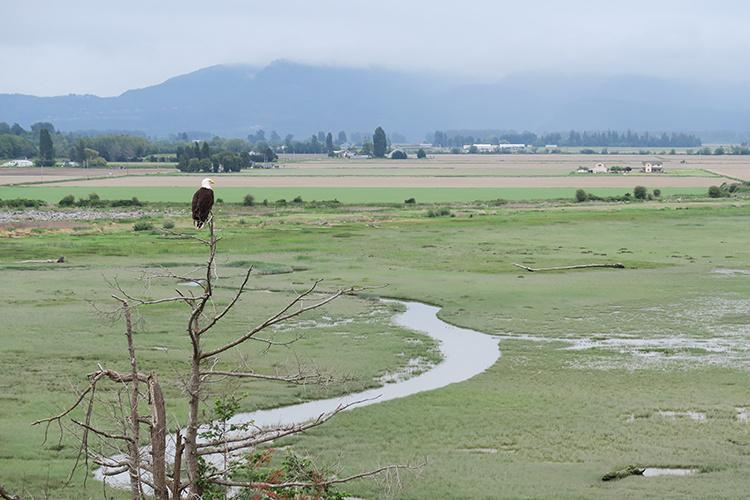 skagit-river-delta_Andrew Stevens USGS_750x500.jpg