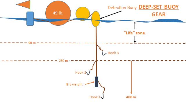 Diagram of Deep Set Buoy Gear