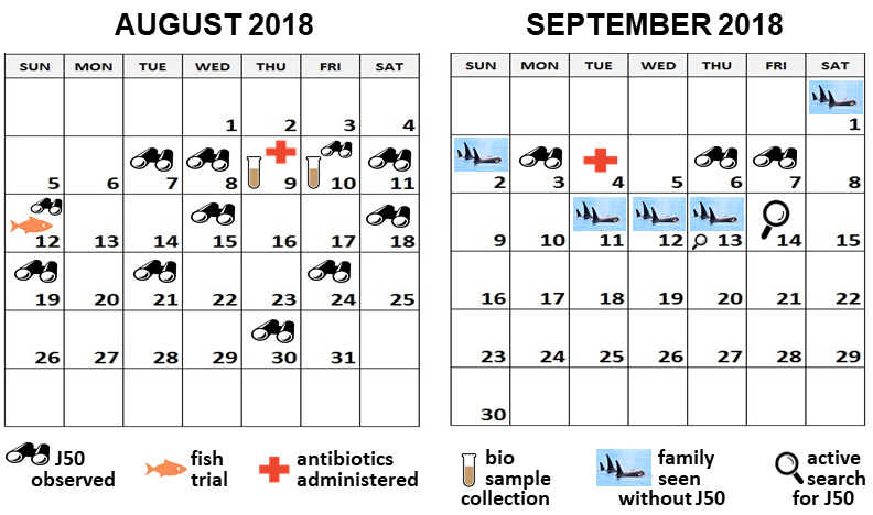 Calendar shows actions in Aug/Sep 2018. J50 observed Aug 7, 8, 10, 11, 12, 15, 18, 19, 21, 24, 30 and Sep 3, 6, 7. Antibiotics administered Aug 9 & Sep 4. Fish trial Aug 12. Family seen without J50 Sep 1, 2, 11, 12, 13. Active search Sep 13 & 14