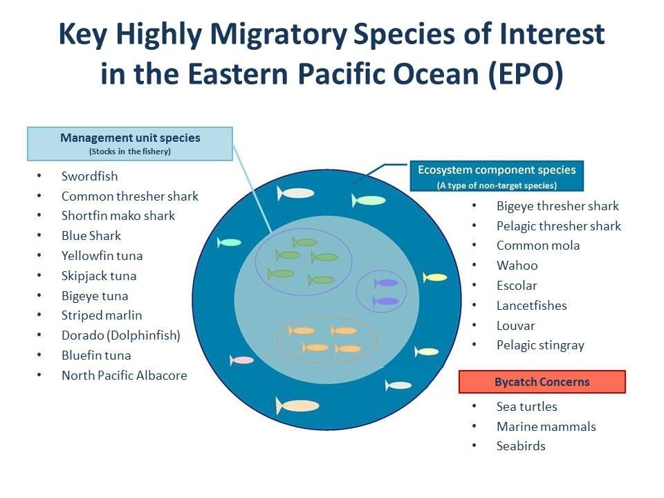 Key Highlt MIgratory Species of Interest in the Eastern Pacific Ocean