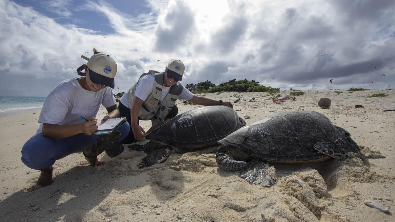 NOAA Fisheries sea turtle researchers, Lindsey Bull and Marylou Staman, measure the length of a female green sea turtle (honu) basking on Tern Island.