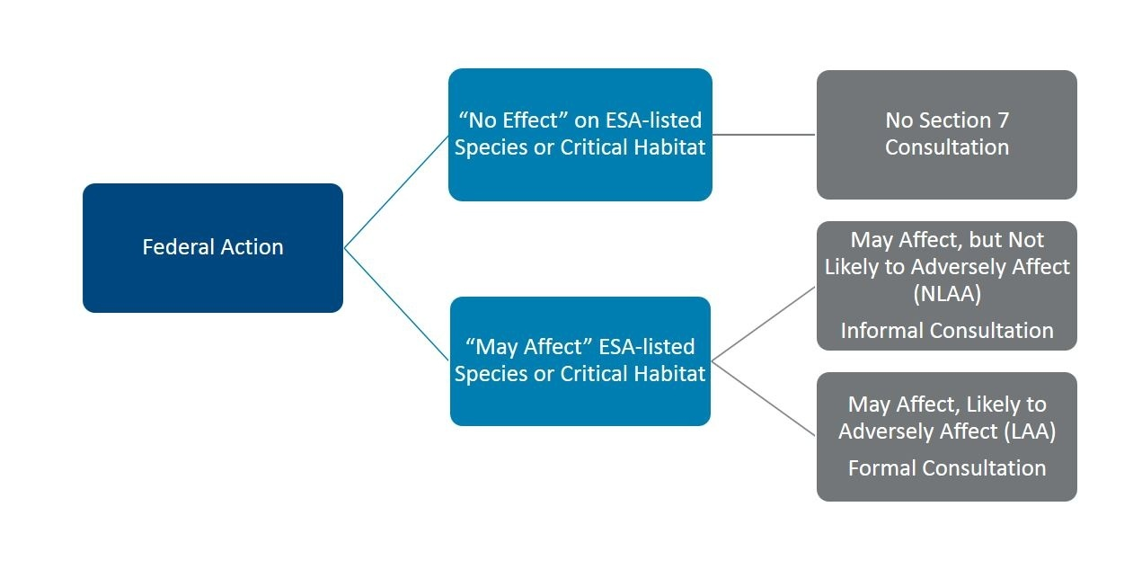 Federal Action Diagram.JPG