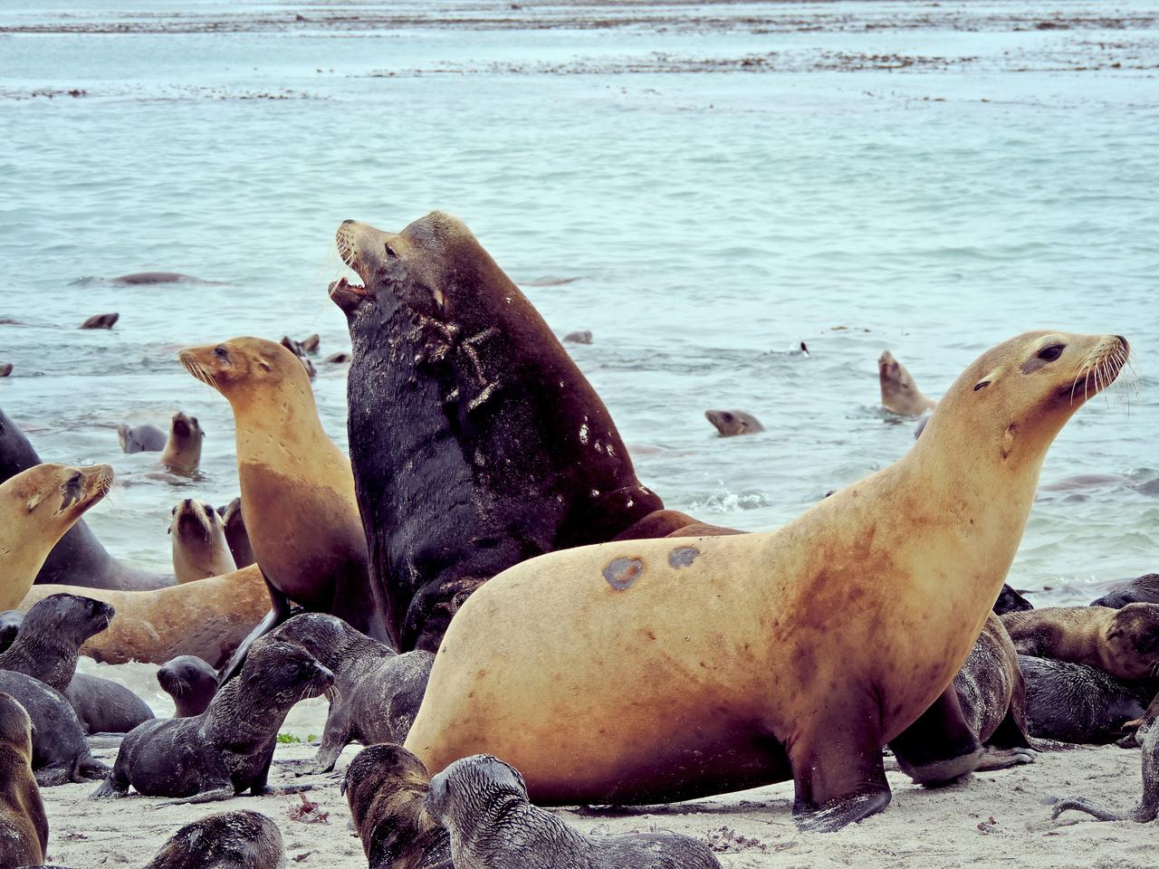 California Sea Lion Rookery, Photo credit: Sharon Melin