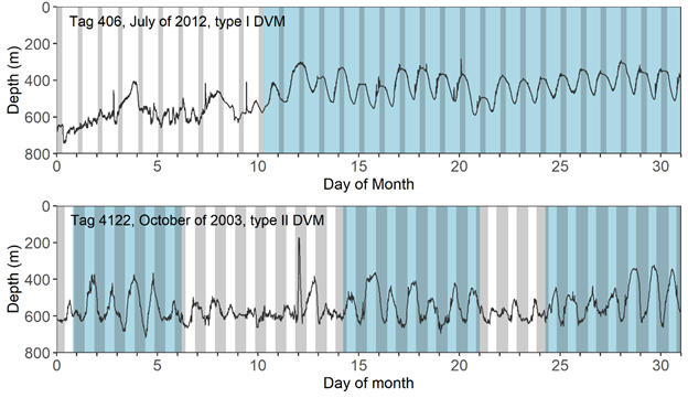 Greenland-turbot_daily_vertical_migration.png