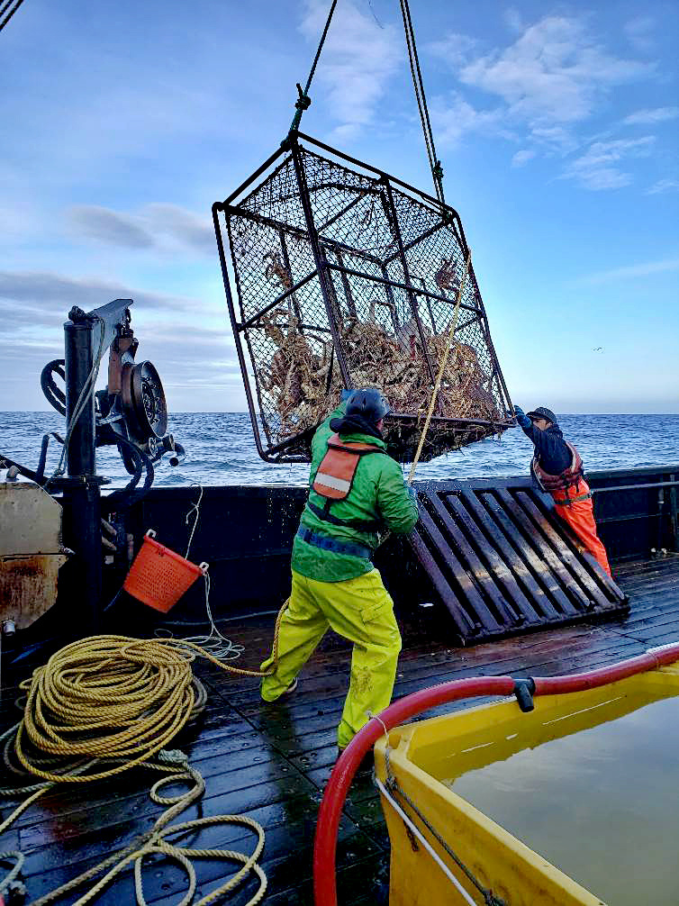 A crab pot is brought on board.