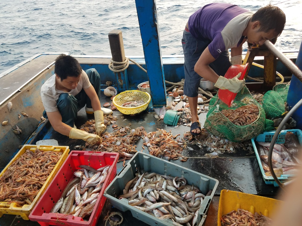 Fishermen sort the day's catch aboard a Vietnamese trawler.