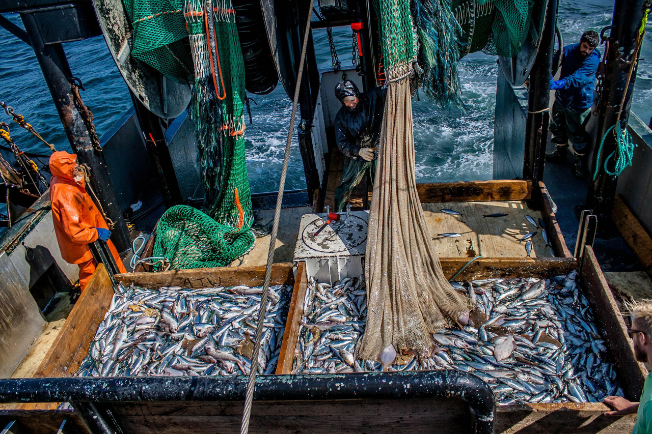 two trawl catches on the stern of a fishing boat