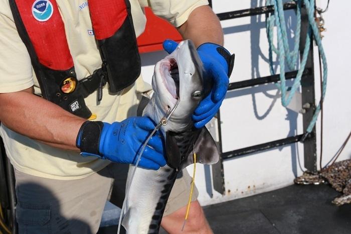 shark_cruise_68.jpg