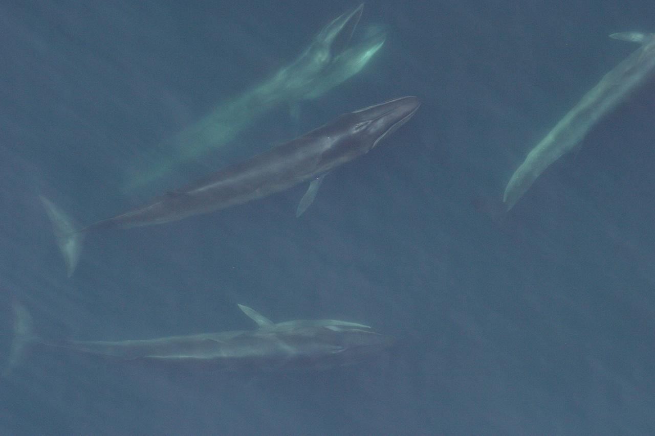 2020-whale-week-sei-1280x853-main.jpg