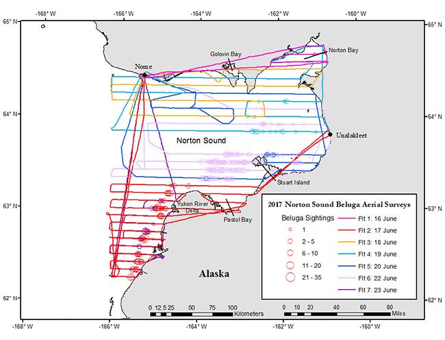 Norton Sound beluga surveys_blog 1mms.png