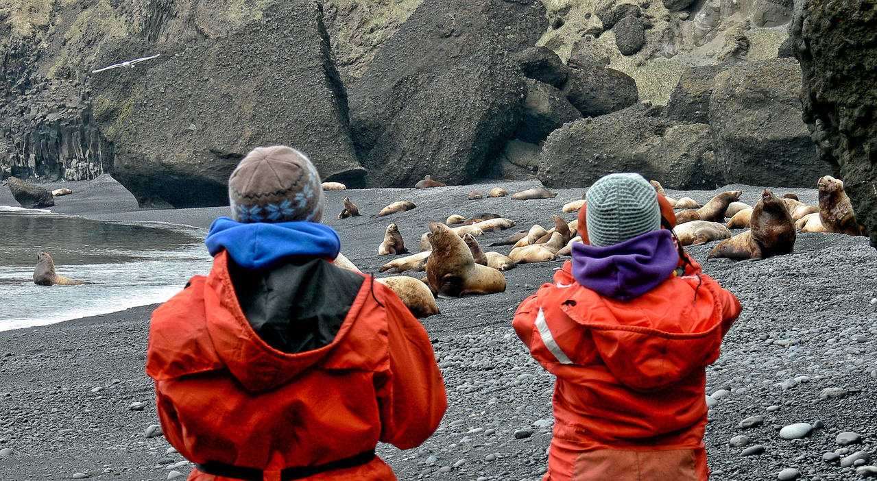 Steller sea lion researchers