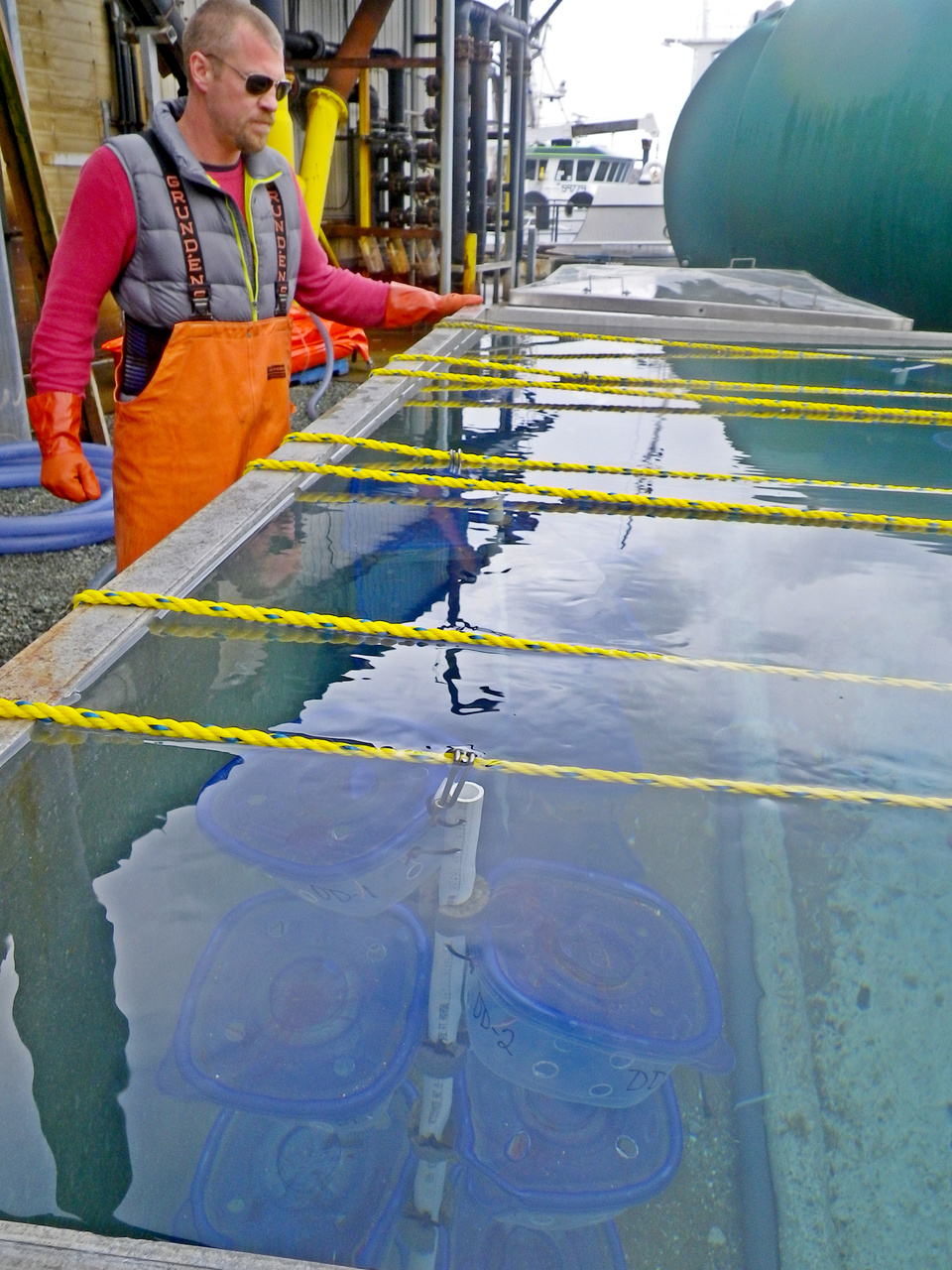 Jeff Cox (Bering Sea Fisheries Research Foundation) is checking for molted crab in condos.