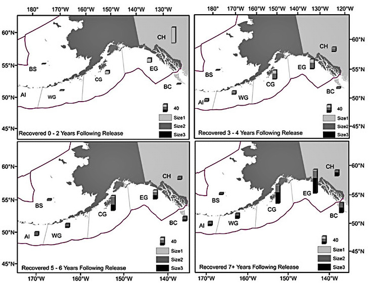 Recoveries of known-age tagged juveniles by recovery size and recovery area, recovered 0 – 2 years following release (top left panel), recovered 3 – 4 years following release (top right panel), recovered 5 – 6 years following release (bottom left panel), and recovered 7+ years following release (bottom right panel). BC = British Columbia, EGOA = Eastern Gulf of Alaska (GOA), CGOA = Central GOA, WGOA = Western GOA, AI = Aleutian Islands, and BS = Bering Sea. Size 1 = 41-56 cm, size 2 = 57-66 cm, and size 3 >66 cm.