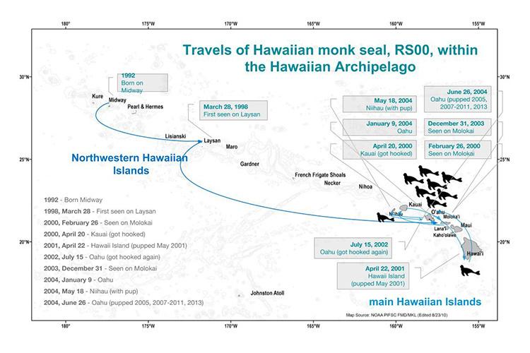 Travels of Hawaiian monk seal, RS00, within the Hawaiian Archipelao.