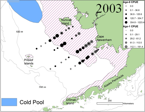 Cold Pool 2003