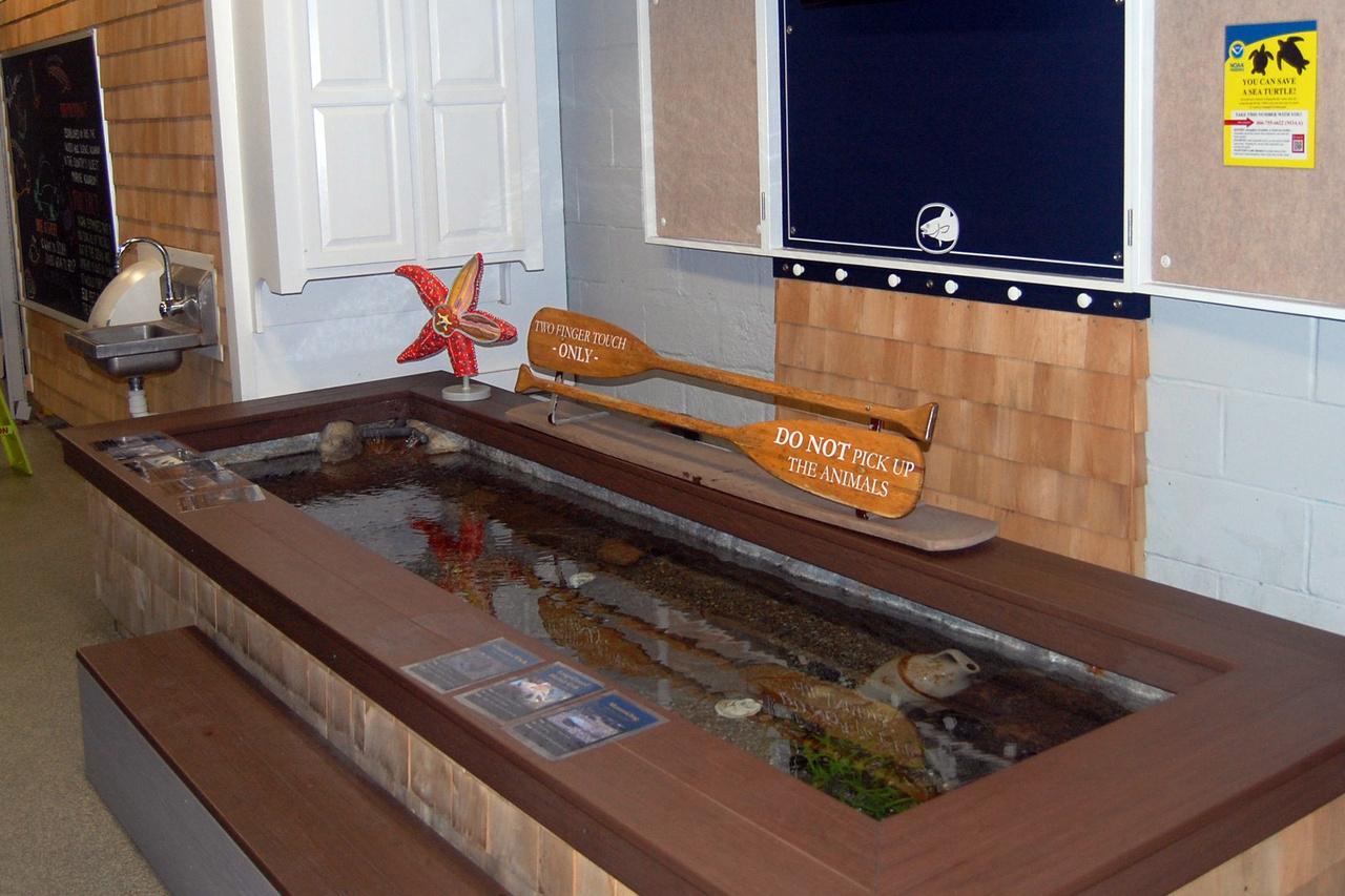 touch tank with oar