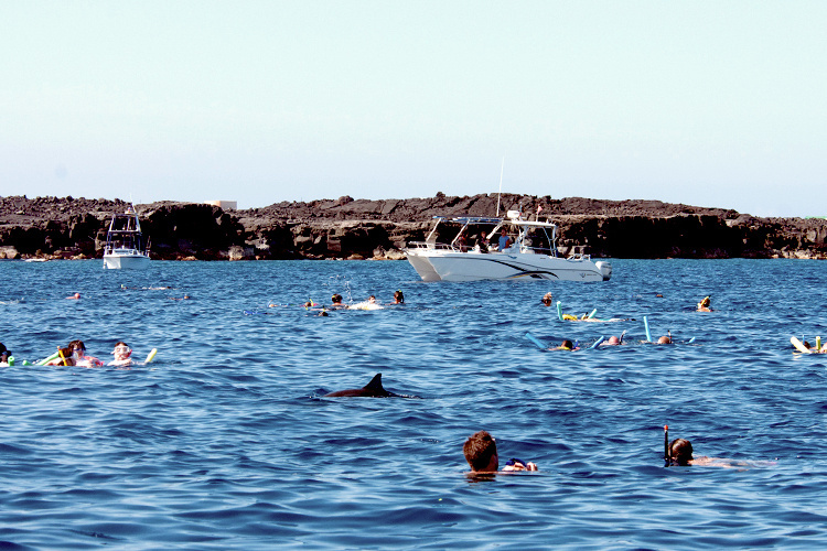 Human close interactions with spinner dolphins in waters.