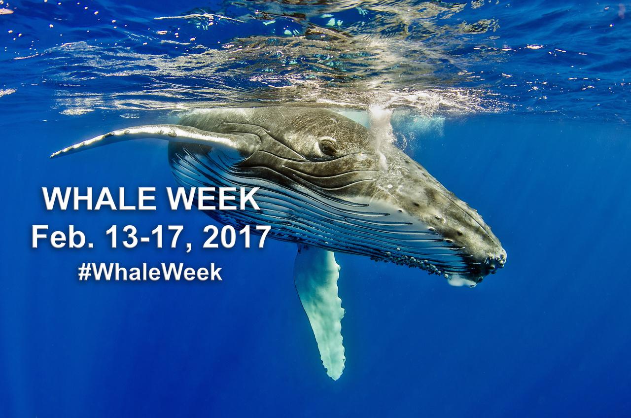 whale_week_cover_Twitter.jpg
