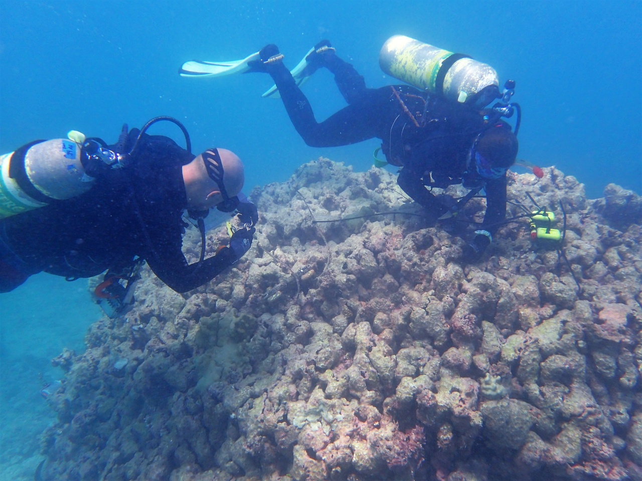 Team members Kerry Reardon and Ari Halperin retrieve and replace temperature loggers and conduct a bleaching survey at Lisianski. <i>photo: NOAA Fisheries/Jennifer Samson. </i>