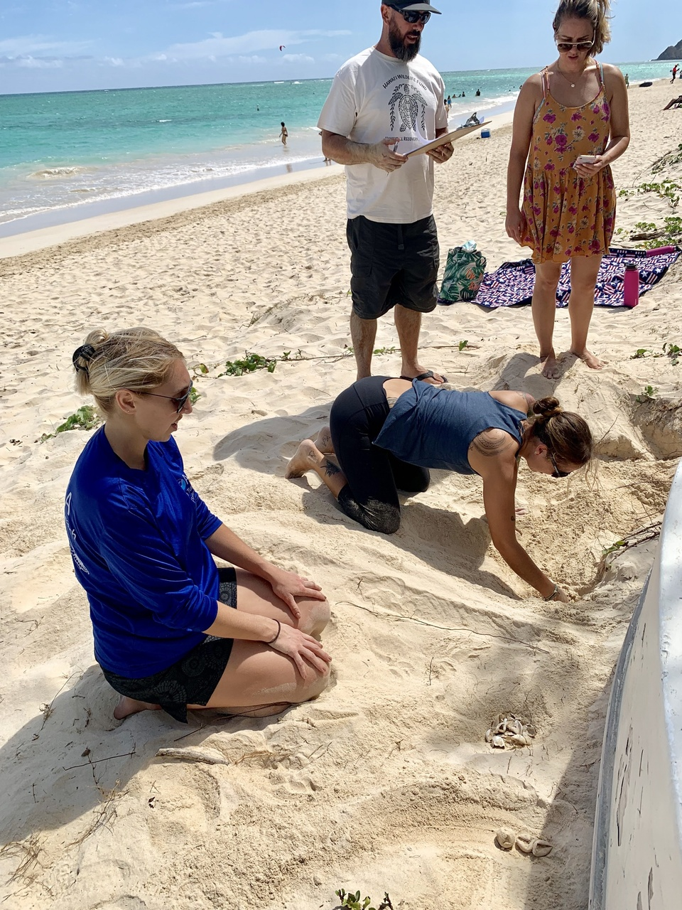 Sea turtle biologists excavate nest in sand.