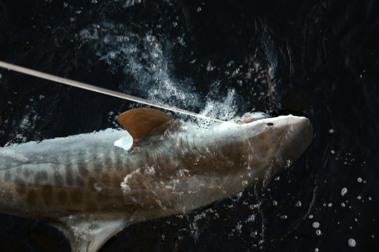 shark_cruise_44a.JPG
