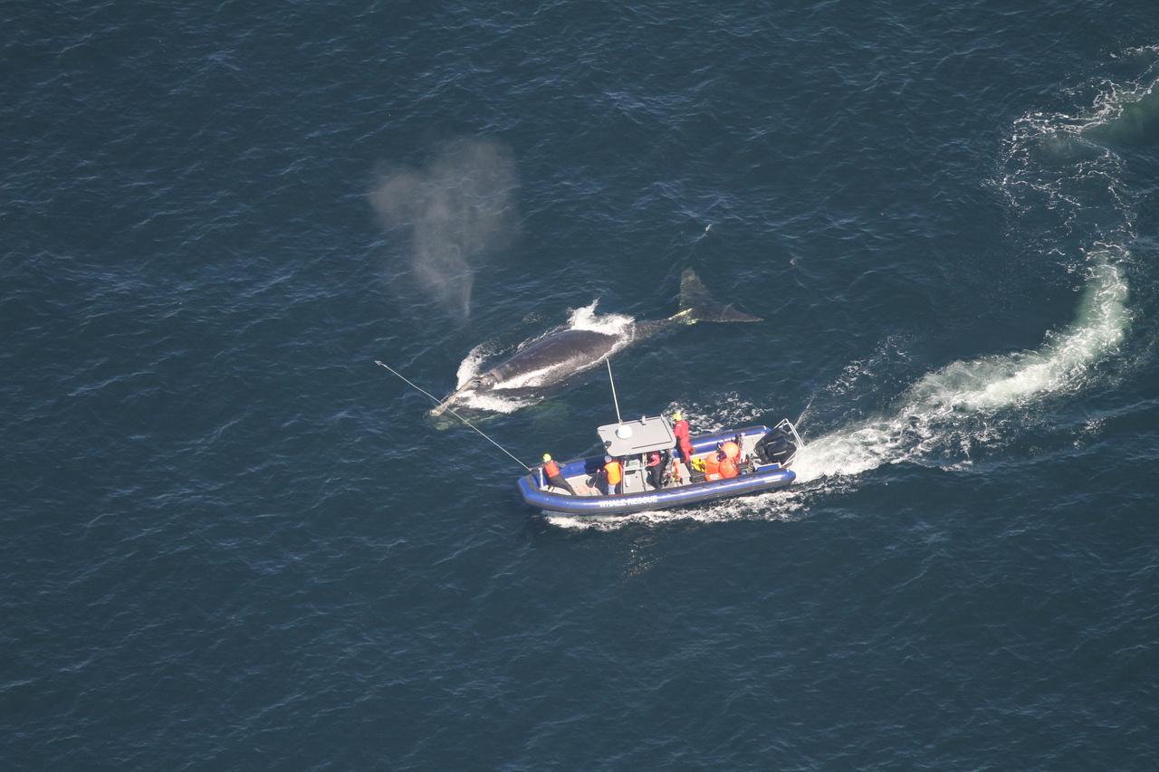 5184x3456-campobello-whale-recurepteam-right-whale-4423.jpg