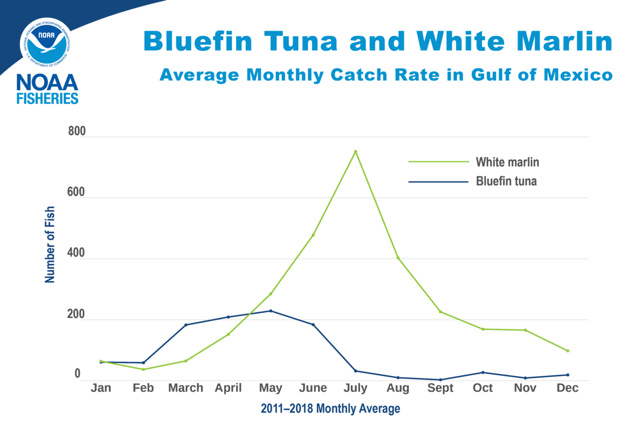 Graph of bluefin tuna and white marlin average monthly catch rate in the Gulf of Mexico