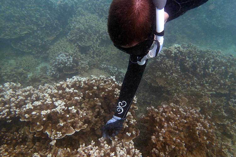 750x500-diver-deposit-urchins-NOAA-PIRO.jpg