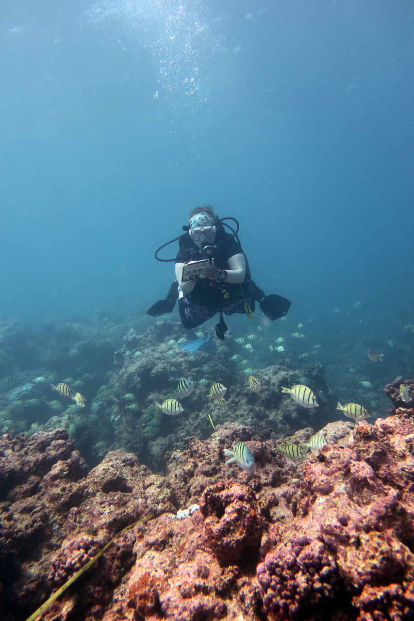 Sometimes you have to wear many hats. Our Chief Scientist Hannah Barkley works hard in the field conducting a coral bleaching survey. She will return to the ship after a day of diving to synthesize data and plan the next day's operations. <i>Photo: NOAA Fisheries/James Morioka. </i>