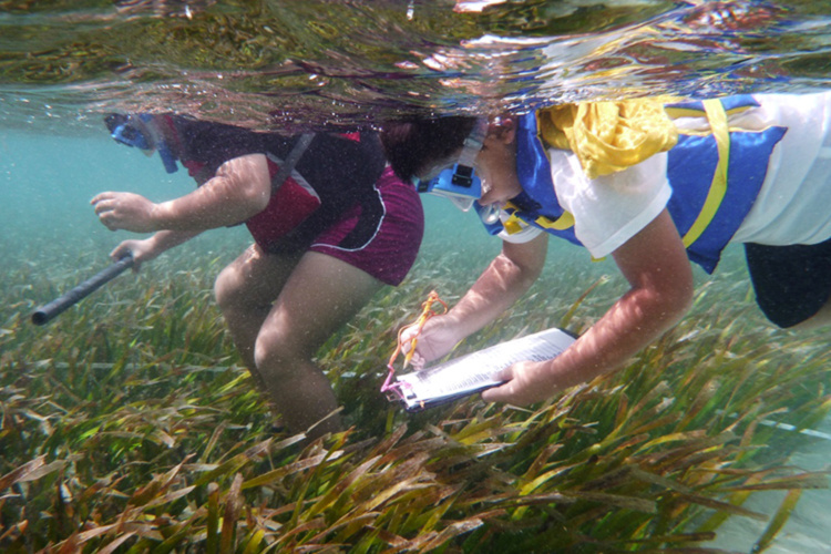 Coral reef monitoring.